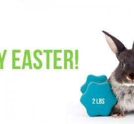 bunny-header